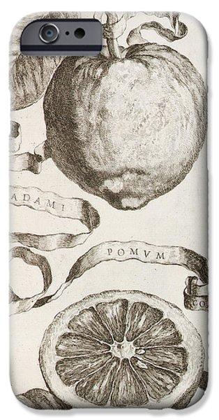 Flora Drawings iPhone Cases - Adams Apple iPhone Case by Cornelis Bloemaert