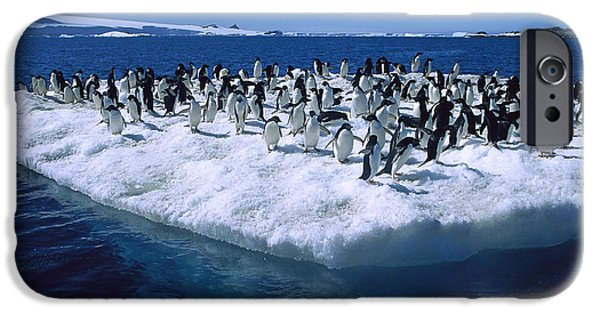 Hope And Change iPhone Cases - Adelie Penguins On Icefloe Antarctica iPhone Case by Colin Monteath