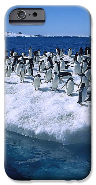 Adelie Penguins On Icefloe Antarctica iPhone Case by Colin Monteath