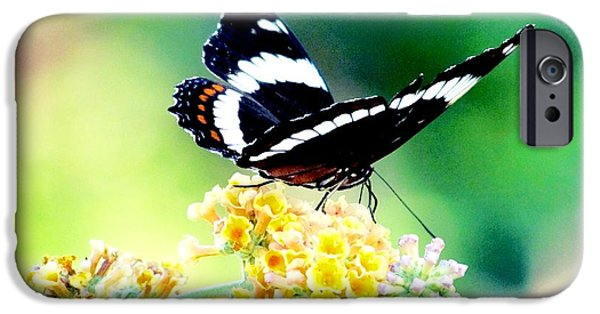 Admiral Digital iPhone Cases - Admiral Butterfly in the English Gardens iPhone Case by Elaine Weiss