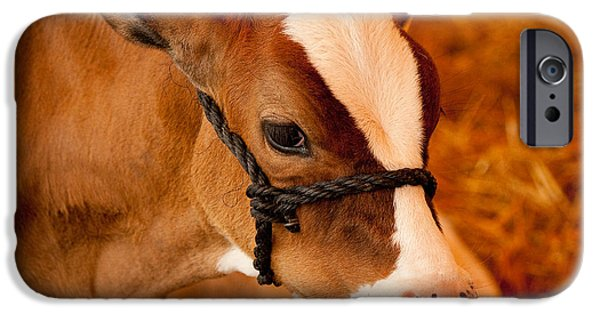 Recently Sold -  - Innocence iPhone Cases - Adorable Calf iPhone Case by Kristia Adams
