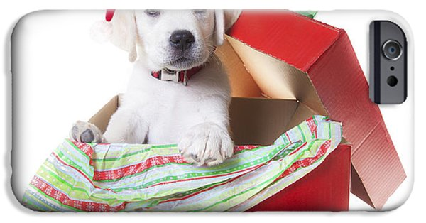 Christmas Greeting iPhone Cases - Adorable Christmas Puppy  iPhone Case by Diane Diederich