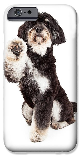 Animals Photographs iPhone Cases - Adorable Poodle Mix Breed Dog Extending Paw iPhone Case by Susan  Schmitz