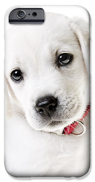 Labrador Retriever Puppy iPhone Cases - Adorable Yellow Lab Puppy iPhone Case by Diane Diederich