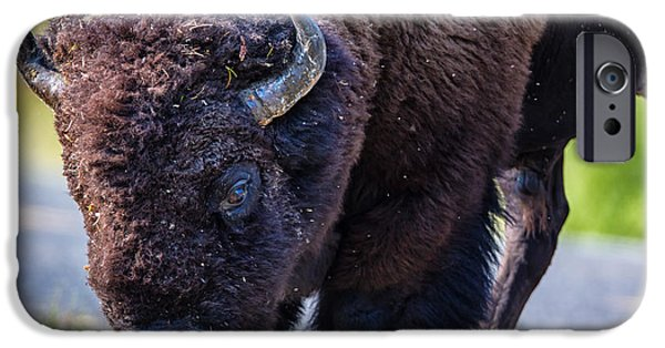 Adult iPhone Cases - Adult Bison Staring iPhone Case by Andres Leon