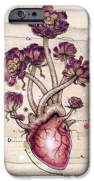 Anatomical iPhone Cases - Aeonium Heart iPhone Case by Fay Helfer
