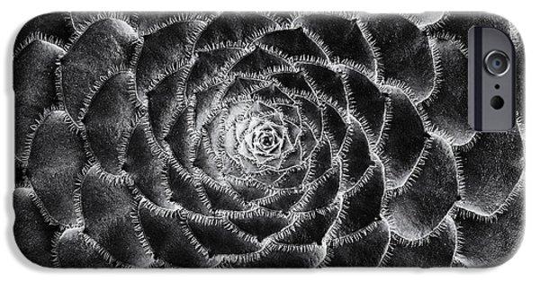 Rosette iPhone Cases - Aeonium Monochrome iPhone Case by Tim Gainey