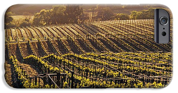 Vineyard In Napa iPhone Cases - Aerial View Of Rows Crop In A Vineyard iPhone Case by Panoramic Images
