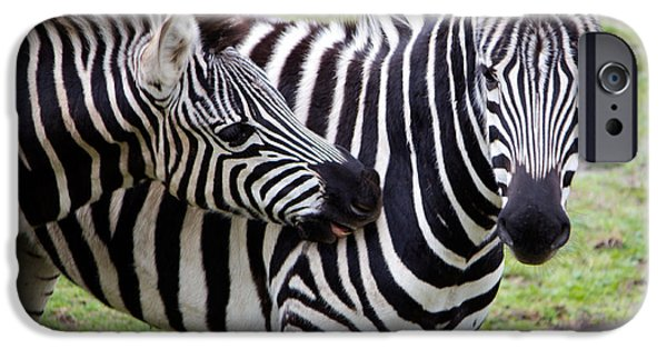 Bonding iPhone Cases - Affectionate Zebras iPhone Case by Nicholas Blackwell