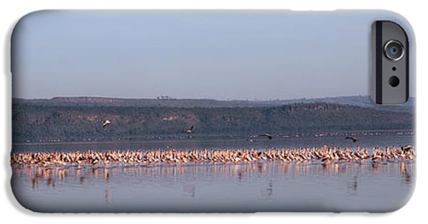 Reflection In Water iPhone Cases - Africa, Kenya, Lake Nakuru National iPhone Case by Panoramic Images