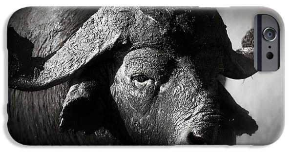 Monotone Photographs iPhone Cases - African buffalo bull close-up iPhone Case by Johan Swanepoel