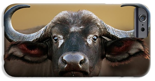 Shoulders iPhone Cases - African buffalo Cow Portrait iPhone Case by Johan Swanepoel