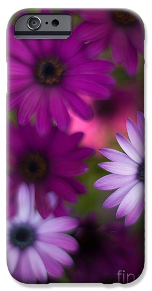 Floral Photographs iPhone Cases - African Daisy Collage iPhone Case by Mike Reid
