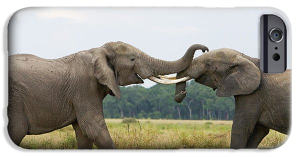 Elephant iPhone Cases - African Elephant Bulls Fighting iPhone Case by Suzi Eszterhas