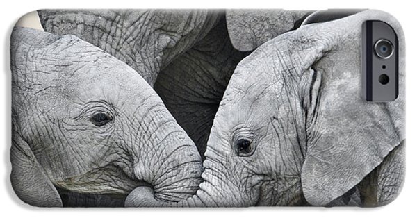 Wild Animals iPhone Cases - African Elephant Calves Loxodonta iPhone Case by Panoramic Images