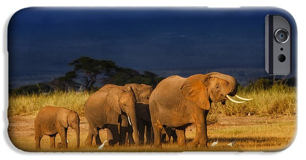 Elephants Pyrography iPhone Cases - African Elephant Herd iPhone Case by Maggy Meyer