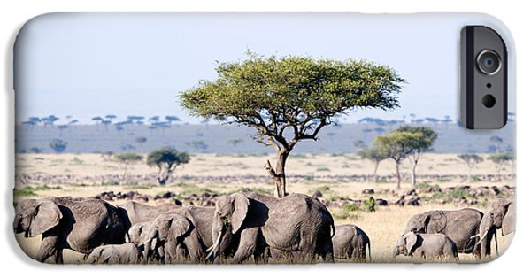 Loxodonta iPhone Cases - African Elephants Loxodonta Africana iPhone Case by Panoramic Images