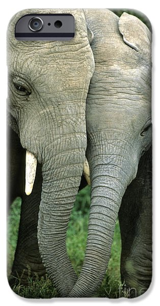 Addo iPhone Cases - African Elephants iPhone Case by Nigel J Dennis