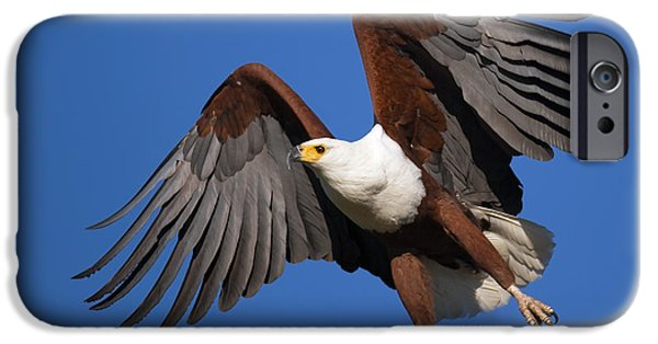 Freedom iPhone Cases - African Fish Eagle iPhone Case by Johan Swanepoel