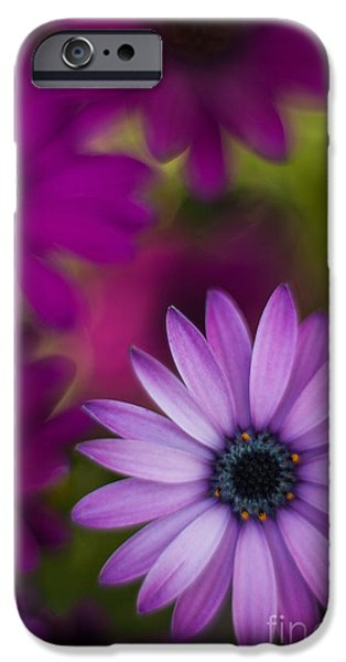 Floral Photographs iPhone Cases - African Gerbera Standout iPhone Case by Mike Reid