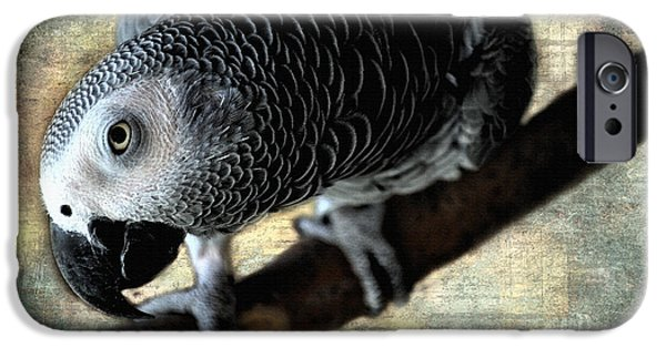 Baby Bird iPhone Cases - African Grey Parrot iPhone Case by Mim White