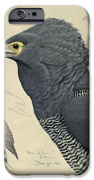 Ethiopia iPhone Cases - African Harrier-Hawk iPhone Case by Louis Agassiz Fuertes
