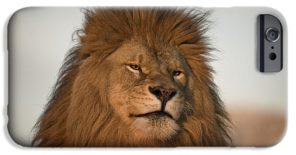 Recently Sold -  - Animals Photographs iPhone Cases - African Lion-animals-image iPhone Case by Wildlife Fine Art
