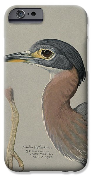 Ethiopia iPhone Cases - African Night Heron  iPhone Case by Louis Agassiz Fuertes