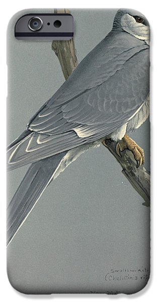 Ethiopia iPhone Cases - African Snow Tailed Kite iPhone Case by Louis Agassiz Fuertes
