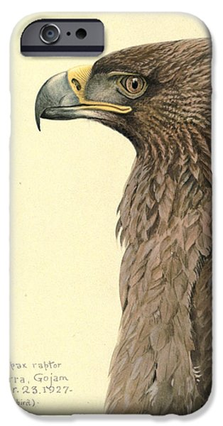 Ethiopia iPhone Cases - African Tawny Eagle iPhone Case by Louis Agassiz Fuertes