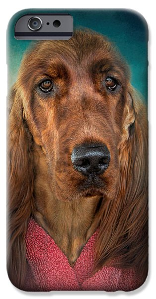 Setter Pointer Art iPhone Cases - After A Swim - Irish Setter - Dog Art iPhone Case by Jai Johnson