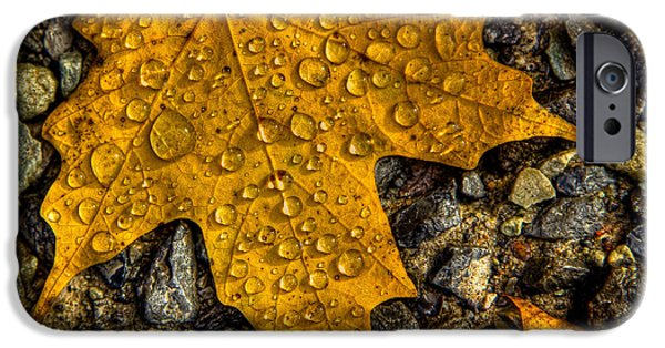 Autumn Leaf On Water iPhone Cases - After an Autumn Rain iPhone Case by David Patterson