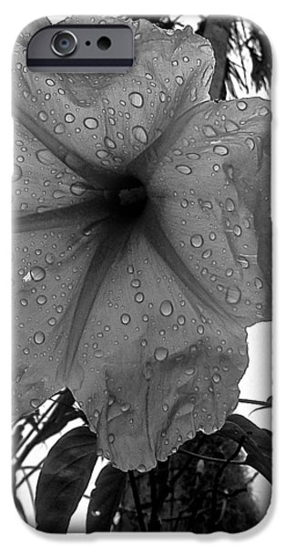Rainy Day iPhone Cases - After the Rain in Black and White iPhone Case by K Simmons Luna