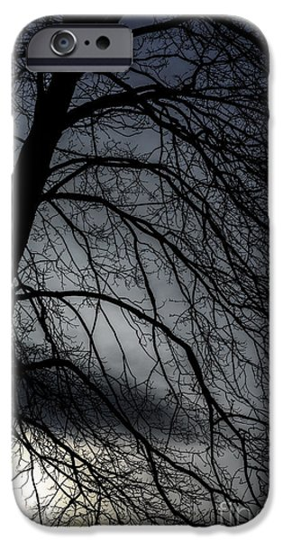 Winter Storm iPhone Cases - Against a Winter Sky iPhone Case by Thomas R Fletcher