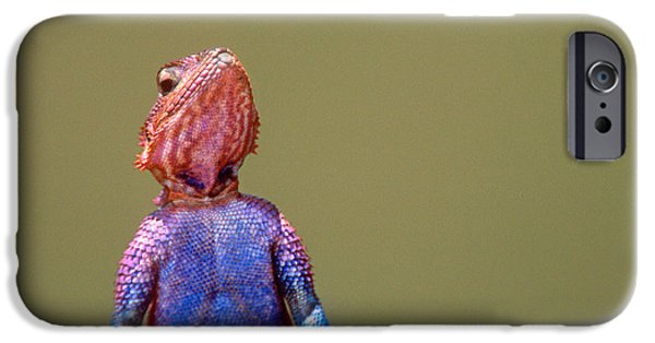 Original Photography iPhone Cases - Agama Lizard Kenya Africa iPhone Case by Panoramic Images