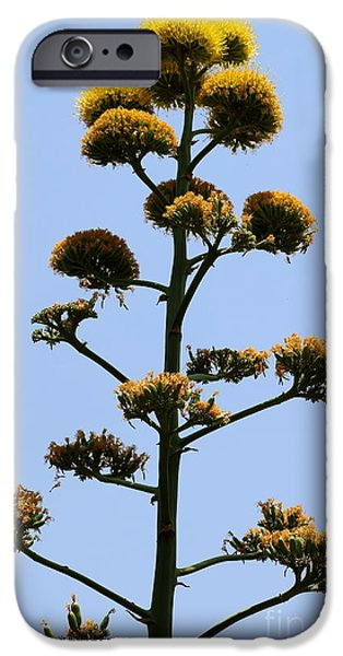 Close Pyrography iPhone Cases - Agave Blossoms iPhone Case by Christiane Schulze Art And Photography