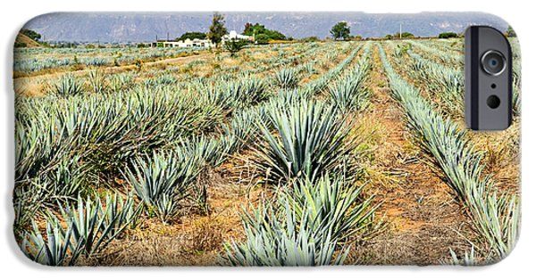 Plantation iPhone Cases - Agave cactus field in Mexico iPhone Case by Elena Elisseeva