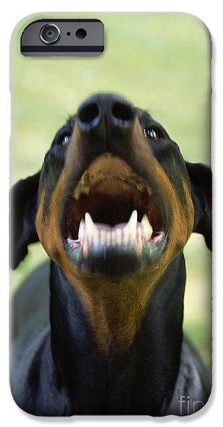 Dog Close-up iPhone Cases - Aggressive Doberman iPhone Case by John Daniels
