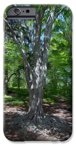 Tree Roots iPhone Cases - Aging Gracefully iPhone Case by Kelvin Booker