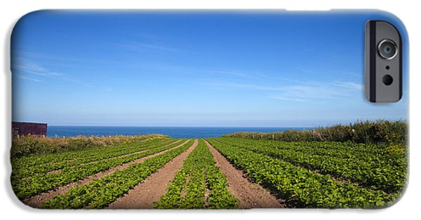 Agriculture iPhone Cases - Agriculture, Ardmore Head, Waterford iPhone Case by Panoramic Images