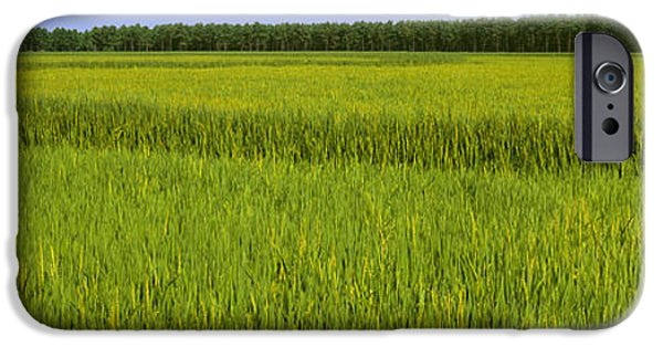 Arkansas iPhone Cases - Agriculture - Crop Of Mid Growth Rice iPhone Case by Timothy Hearsum