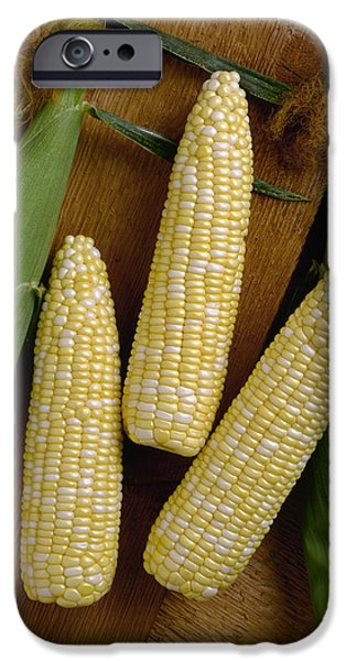 Sweet Corn Farm iPhone Cases - Agriculture - Ears Of Sweet Bi-colored iPhone Case by Ed Young