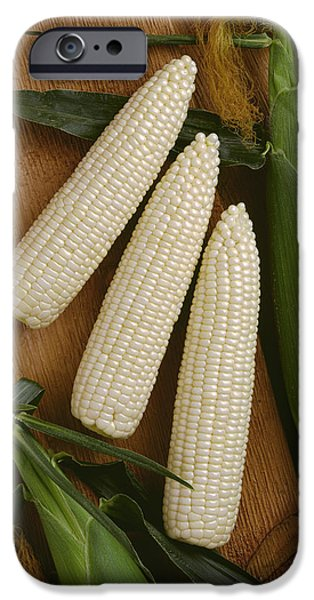 Sweet Corn Farm iPhone Cases - Agriculture - Ears Of Sweet White Corn iPhone Case by Ed Young