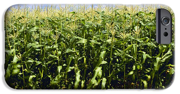 Sweet Corn Farm iPhone Cases - Agriculture - Sideview Of A Stand iPhone Case by Charles Blakeslee
