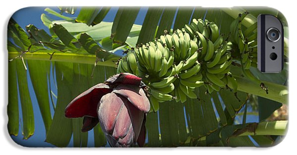 Abstracts From Nature iPhone Cases - Ahui Maia O Wailea - Banana Flower iPhone Case by Sharon Mau