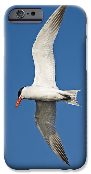 Airborne... iPhone Case by Nina Stavlund