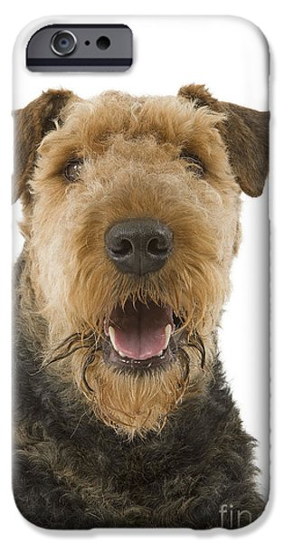 Dog Close-up iPhone Cases - Airedale Terrier iPhone Case by Jean-Michel Labat