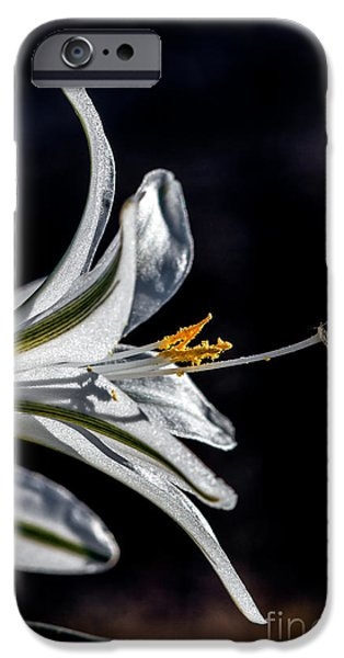 Haybale iPhone Cases - Ajo Lily Close Up iPhone Case by Robert Bales
