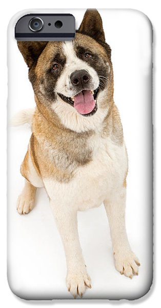 Black Dog iPhone Cases - Akita Dog Sitting and Looking Forward iPhone Case by Susan  Schmitz