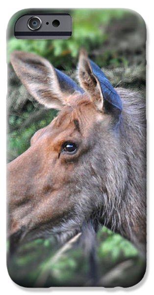 Alaska Moose iPhone Case by Debra  Miller